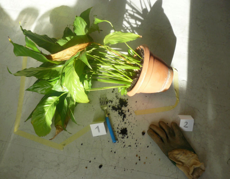 """Concours """"accessoires jardinistiques"""" - participations Captur10"""