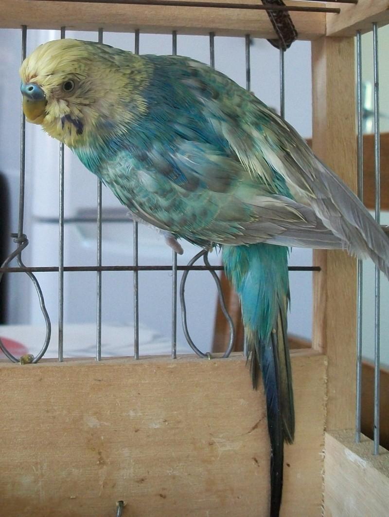 graisse sur tout le plumage 100e0910