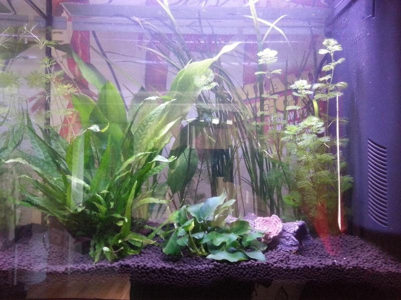 Aquariums 84 Litres +30 Litres Crevettes Taiwan bee f1 Mixt 20121011