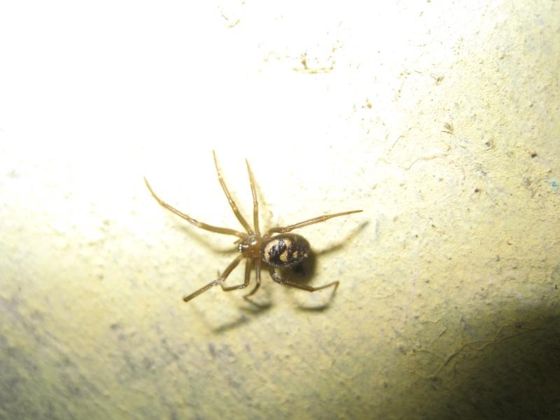 Araignée dans ma cave (département 80) Img_2110