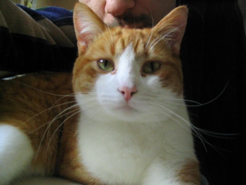Perdu chat roux à lanester/bel air (56) Les_ch12