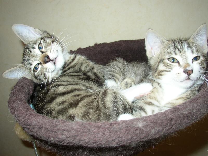 nichée de chatons Juin2010