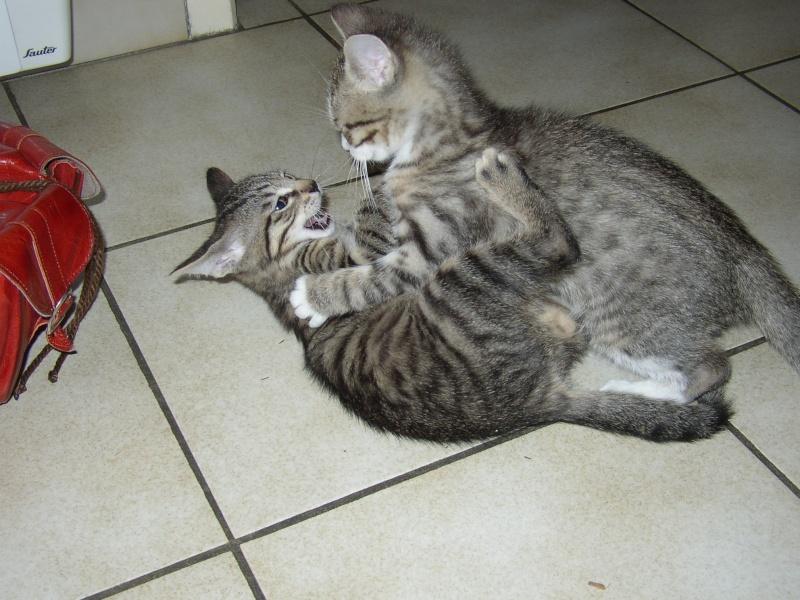 nichée de chatons Juin2011