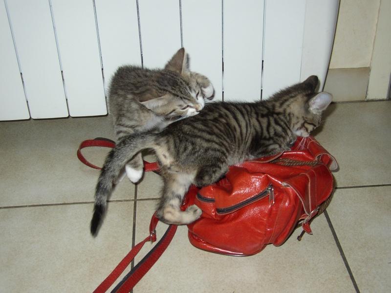 nichée de chatons Juin2012