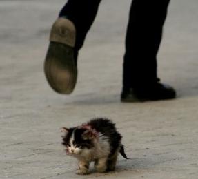 Comment s'occuper d'un chaton orphelin ? Sans-t10