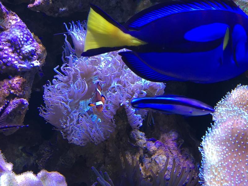 qui connait reeflab vpc??? Img_0310