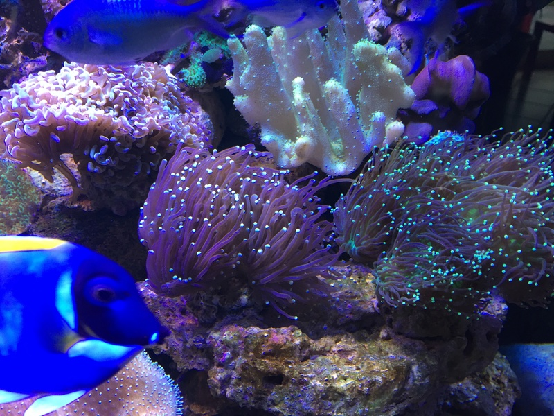 qui connait reeflab vpc??? Img_0316