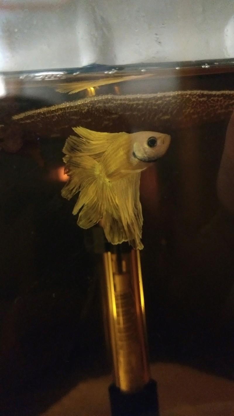 Enki, le poisson perle Img_2010