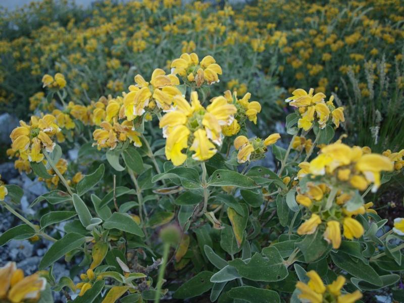 Помогите определить вид растения P1011210