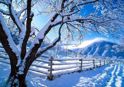 Bon réveillon et joyeux Noel  Neige-10