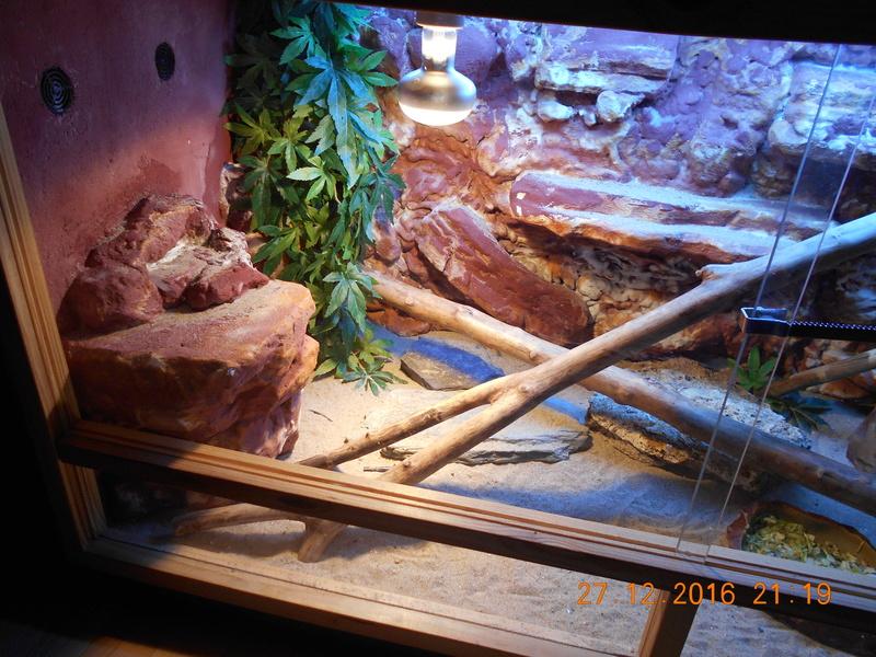 Construction  d'un terrarium pour mon gecko Dscn0022