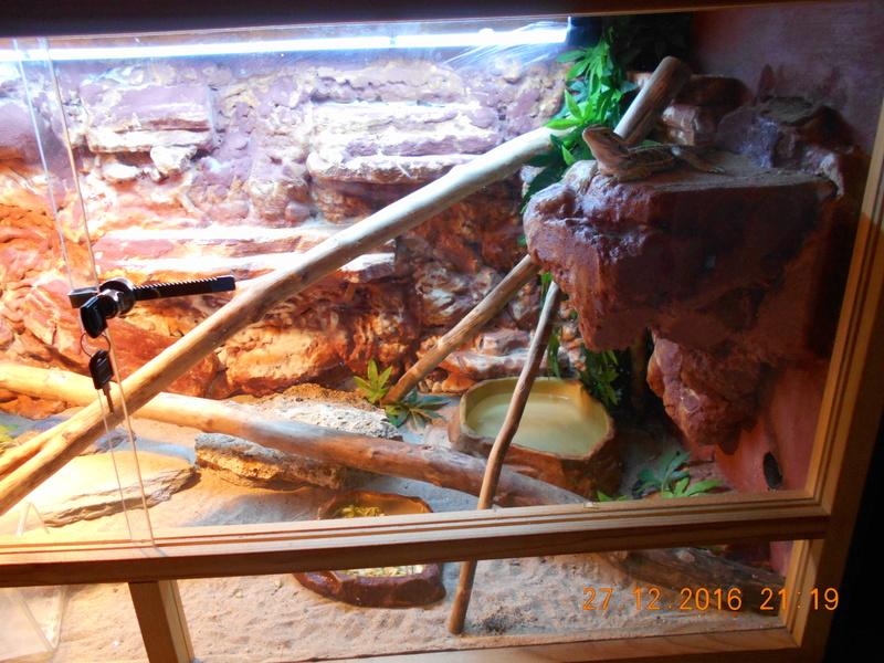 Construction  d'un terrarium pour mon gecko Dscn0023