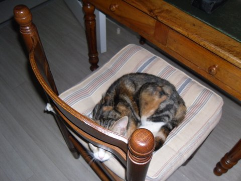 maeva - Maeva, chatonne tricolore, née le 20/05/2016 Sam_0310