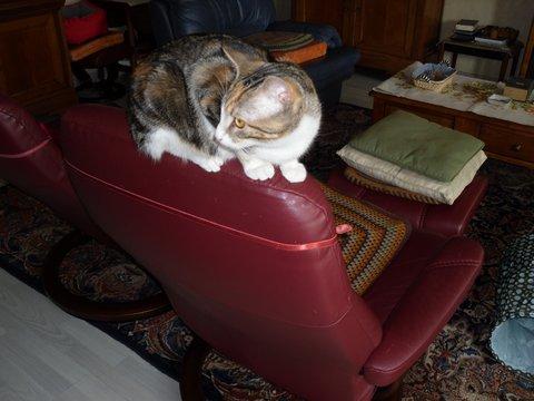maeva - Maeva, chatonne tricolore, née le 20/05/2016 Sam_0413