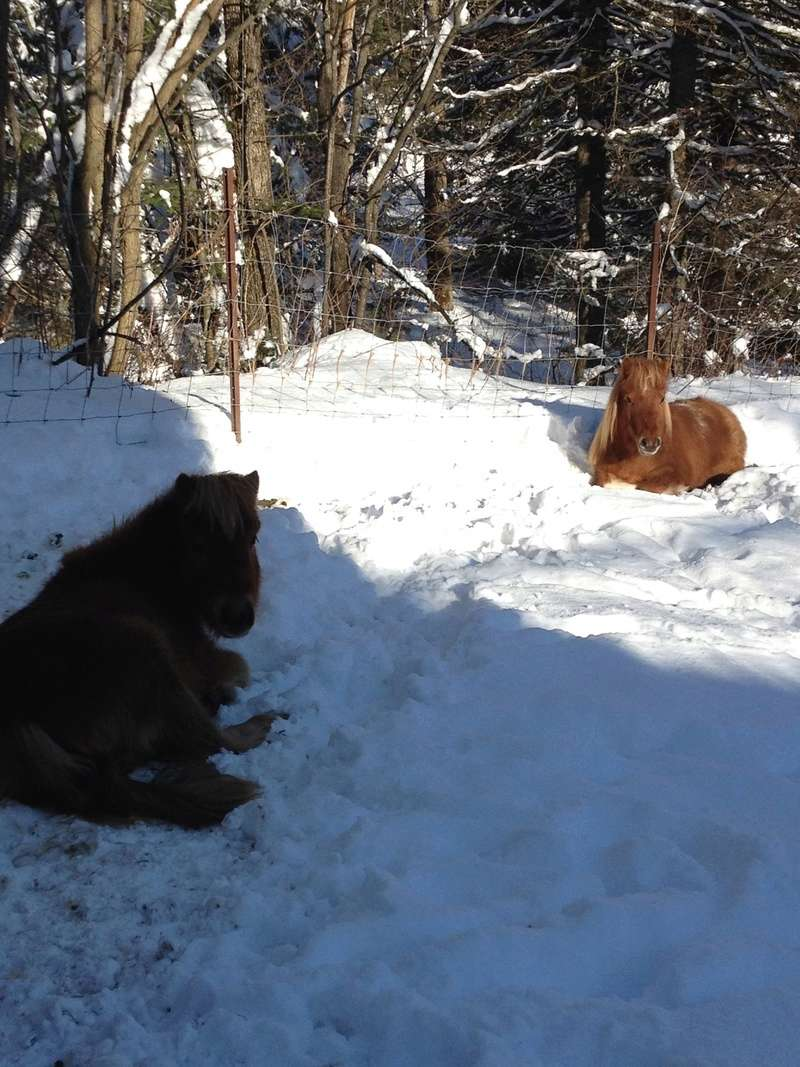 mes boucs attaquent mon cheval  Img_3110