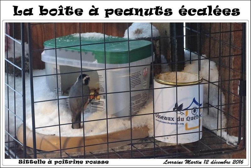 Boîte à peanuts! Sittel14
