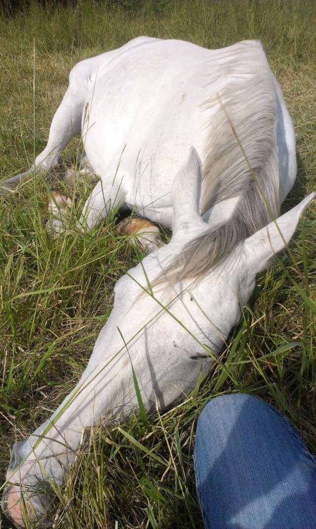 CONCOURS PHOTO : Les chevaux paresseux... Imag0910