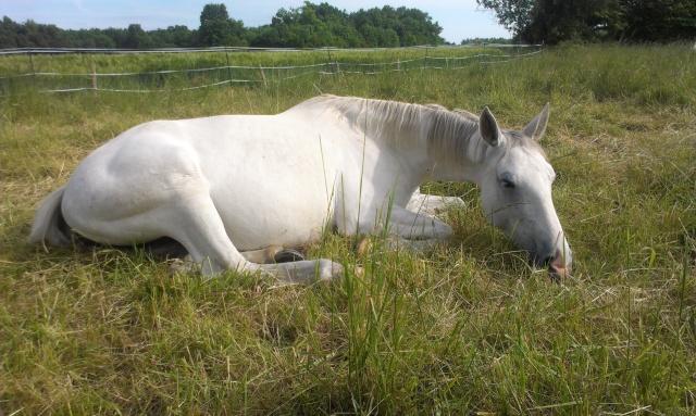 CONCOURS PHOTO : Les chevaux paresseux... Imag0911
