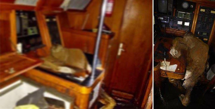 Le corps momifié d'un marin allemand est retrouvé  14570115