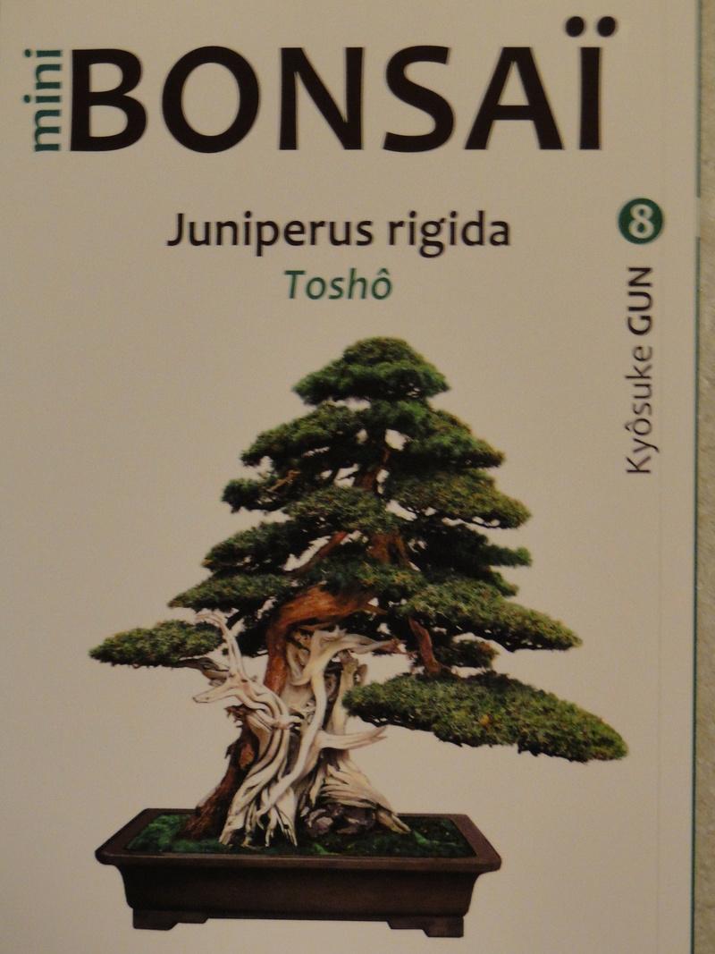 les mini bonsaï  Dsc00413