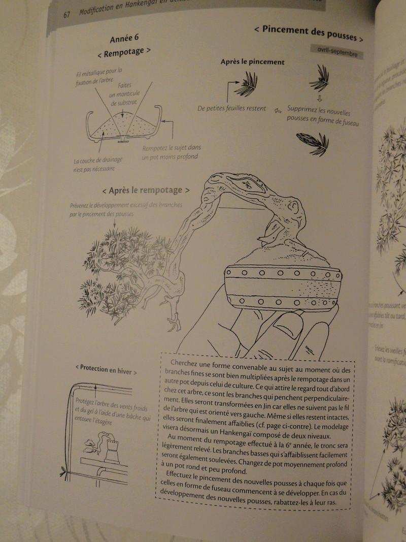 les mini bonsaï  Dsc00414