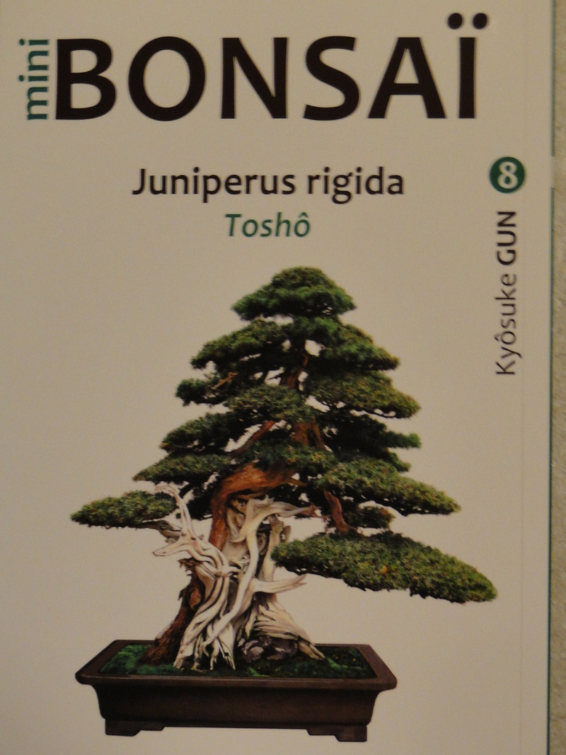 les minis bonsaï  Dsc00421