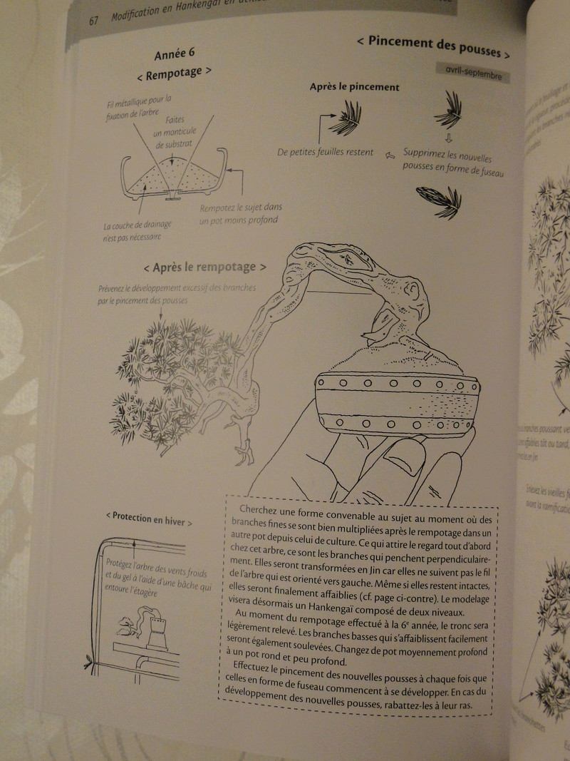 les minis bonsaï  Dsc00422