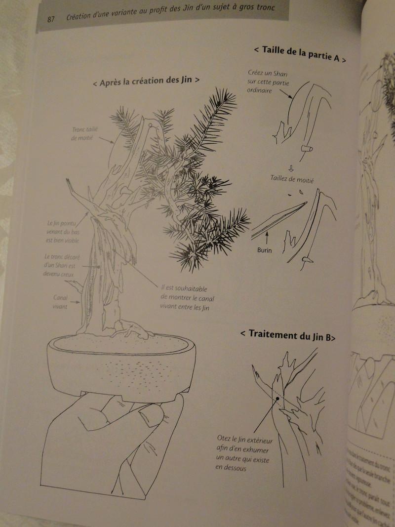 les minis bonsaï  Dsc00423