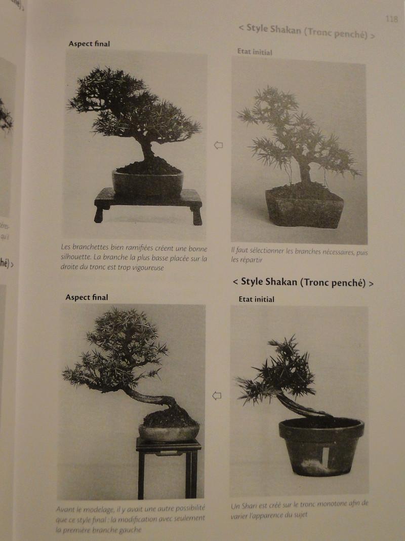 les minis bonsaï  Dsc00424