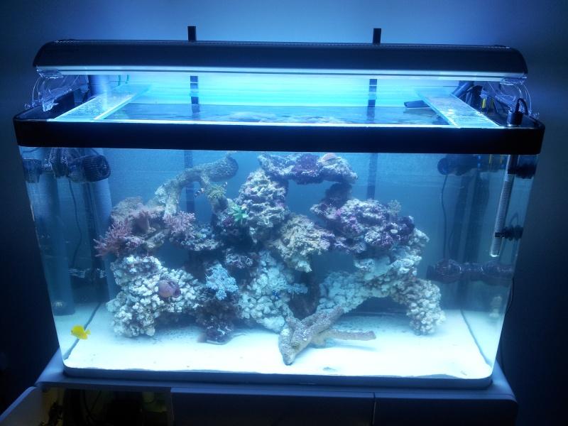 Aquarium de Samix  20130714