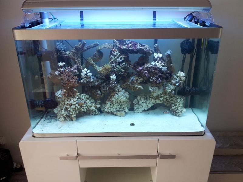 Aquarium de Samix  20130722