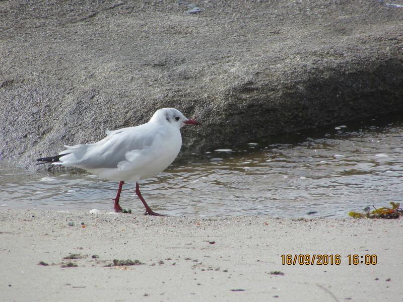 Oiseaux de Bretagne Img_2810