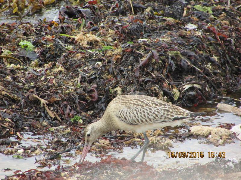 Oiseaux de Bretagne Img_2812