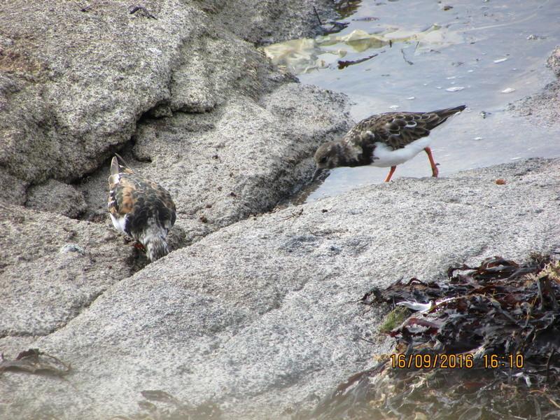 Oiseaux de Bretagne Img_2813