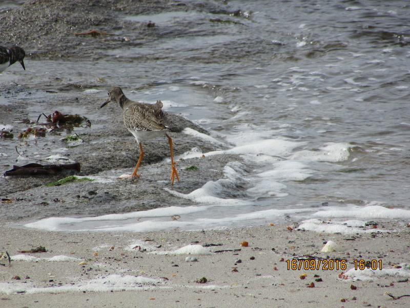 Oiseaux de Bretagne Img_2814