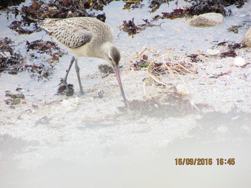 Oiseaux de Bretagne Img_2815