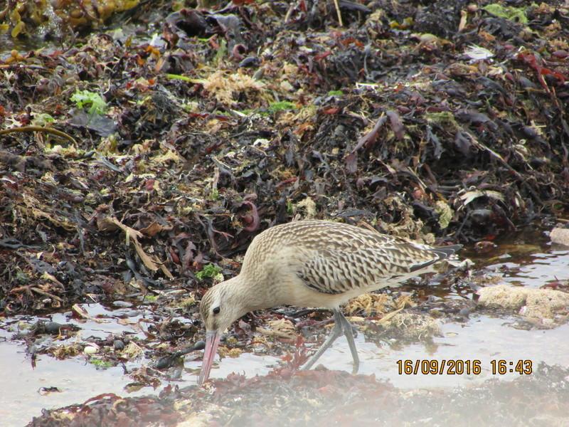 Oiseaux de Bretagne Img_2816