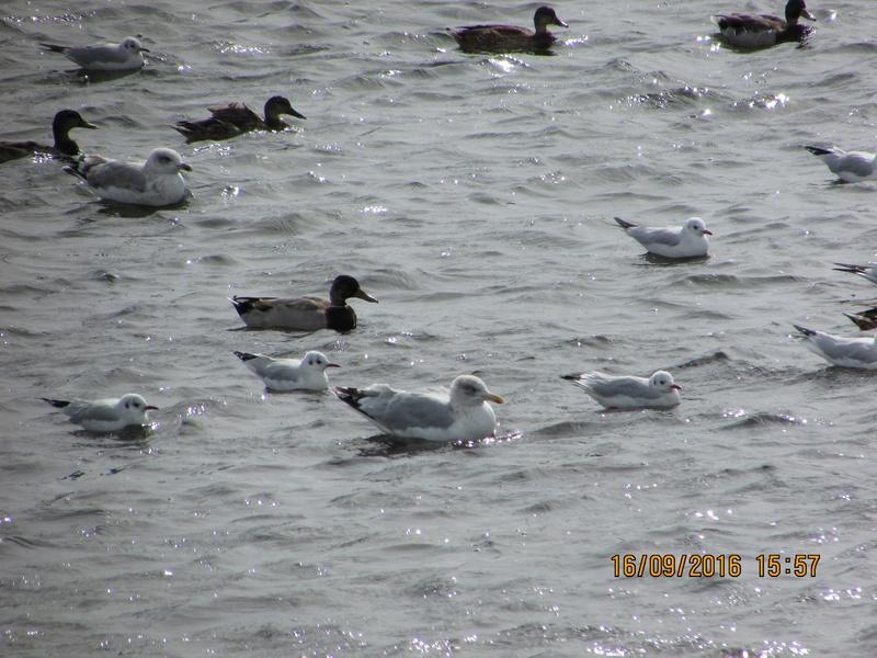 Oiseaux de Bretagne Img_2817