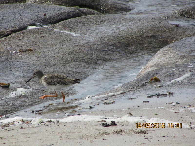 Oiseaux de Bretagne Img_2818