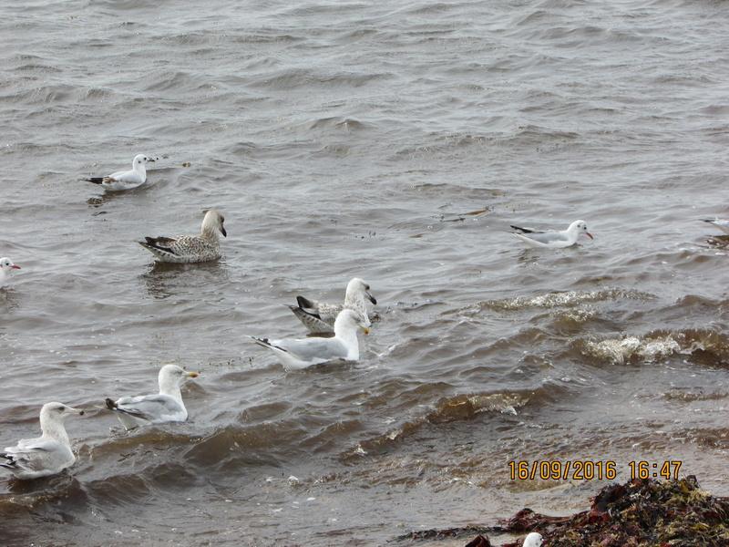 Oiseaux de Bretagne Img_2819