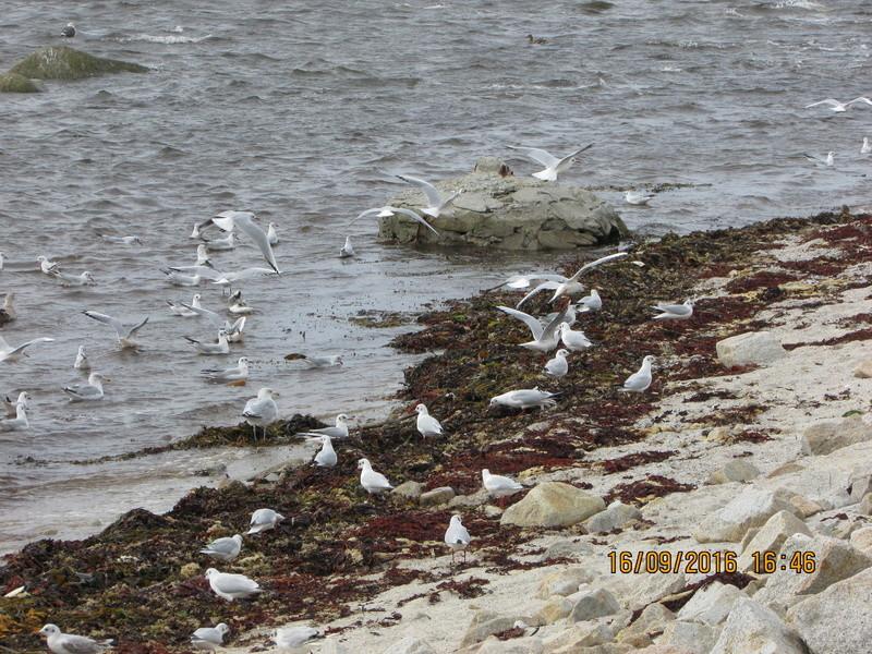 Oiseaux de Bretagne Img_2820