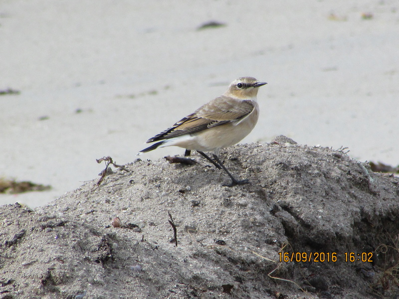 Oiseaux de Bretagne Img_2821