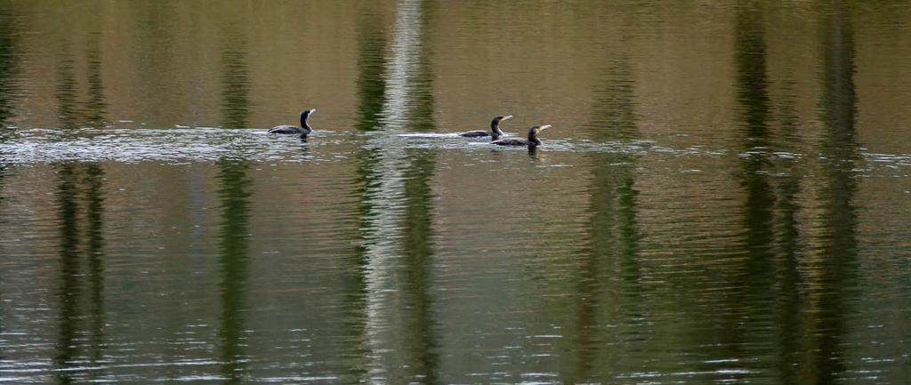 L'étang  11022026