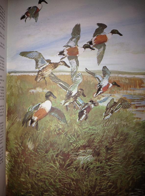 La chasse aux canards du Dr Rocher Img_1117