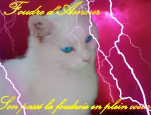 ► Quel Pt'it Bouh' es-tu ?  Foudre12