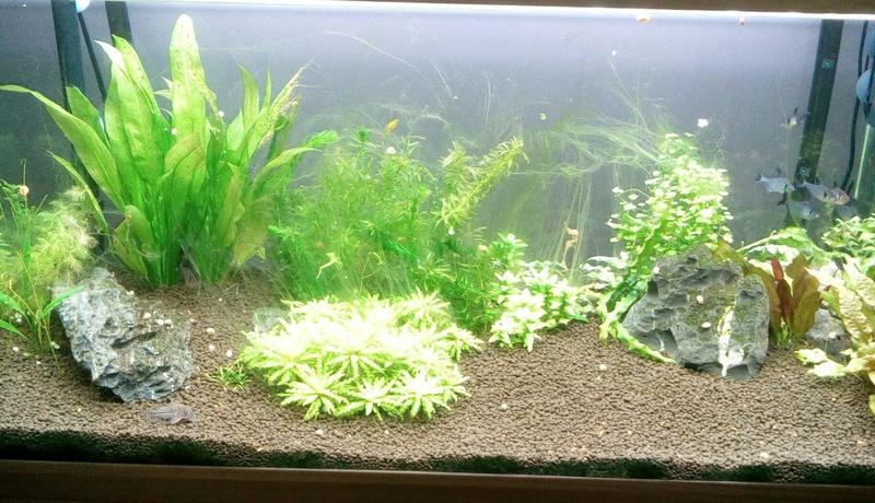 nouvelle version de mon aqua 180 Litres - Page 3 Img_2011