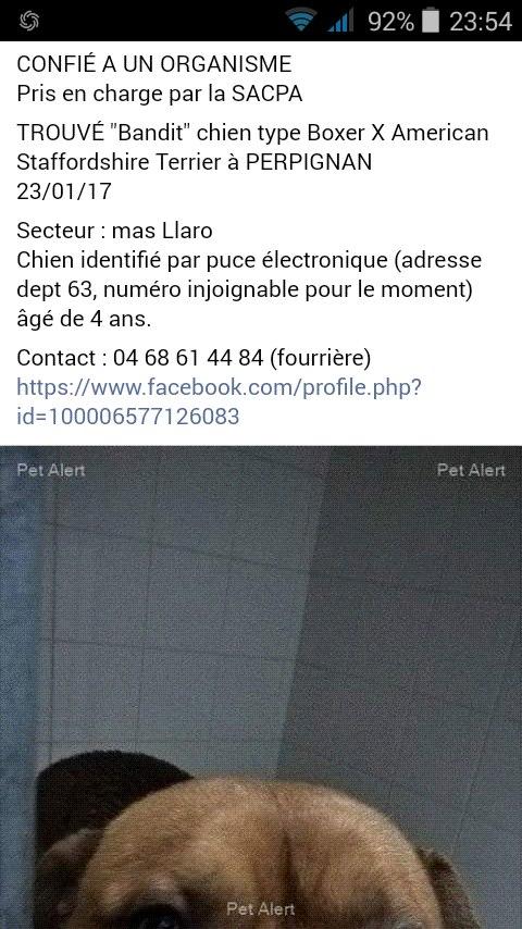 À QUI CE BOXER IDENTIFIÉ DANS LE 63 16195210
