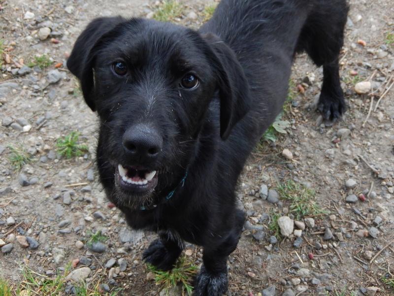 BOLIDE (chien croisé teckel/griffon) 4dscn810