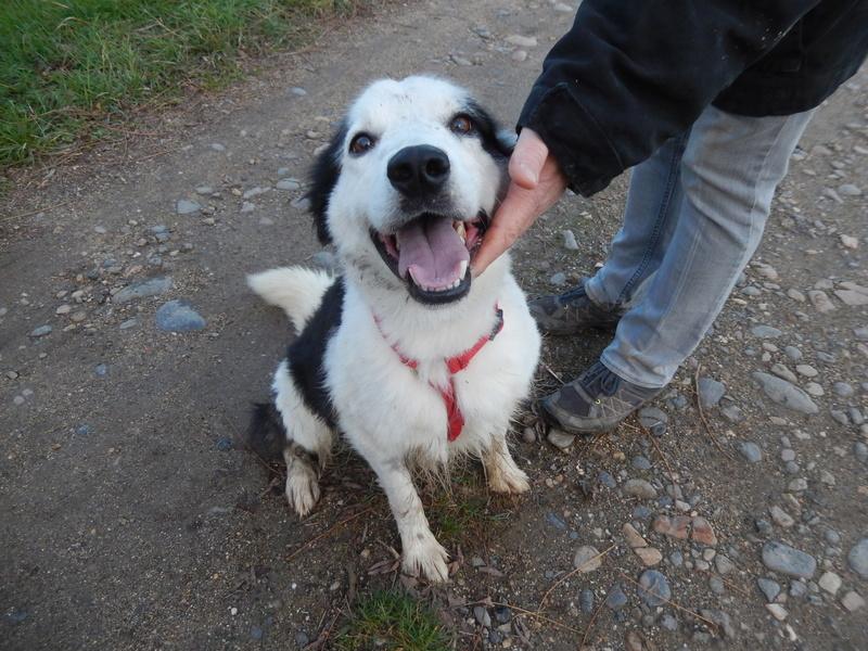 TWISTE (chien mâle border collie noir et blanc) Dscn5214