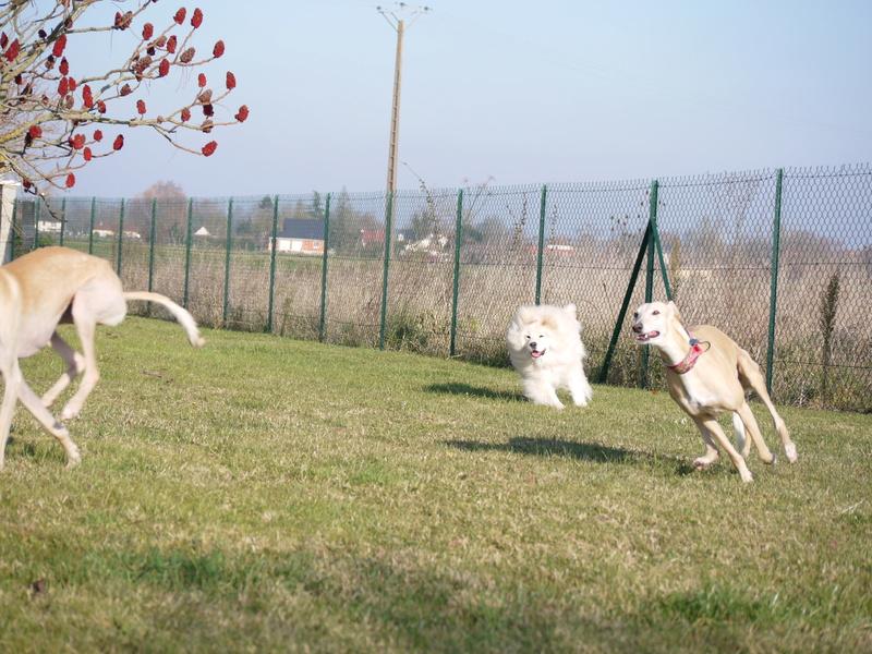 SABRINA galga blanche et crème, 3 ans 1/2  Scooby France  - Page 2 P1320116